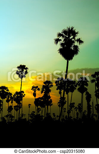 palm trees silhouette on beautiful sunset - csp20315080