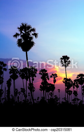 palm trees silhouette on beautiful sunset - csp20315081