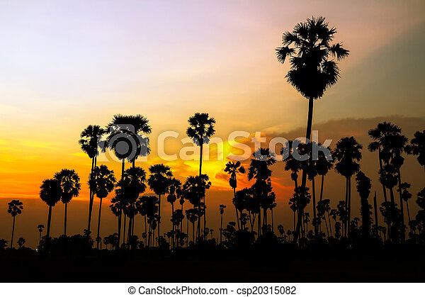 palm trees silhouette on beautiful sunset - csp20315082