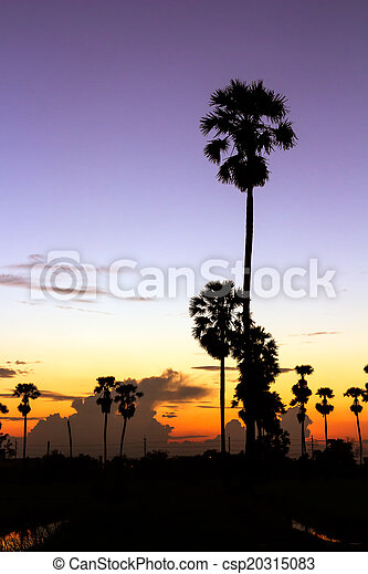palm trees silhouette on beautiful sunset - csp20315083