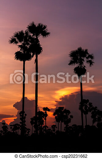 palm trees silhouette on beautiful sunset - csp20231662
