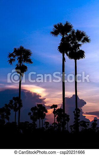 palm trees silhouette on beautiful sunset - csp20231666