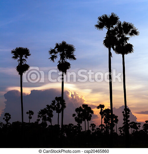 palm trees silhouette on beautiful sunset - csp20465860