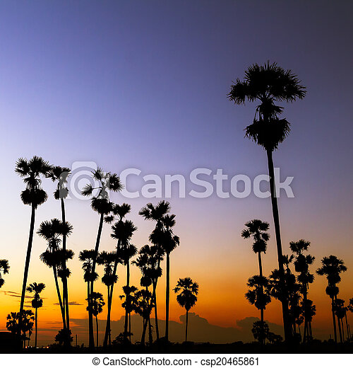palm trees silhouette on beautiful sunset - csp20465861