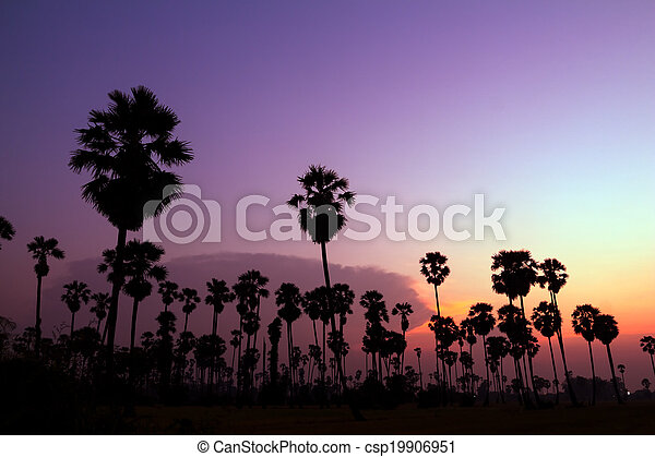 palm trees silhouette on beautiful sunset - csp19906951
