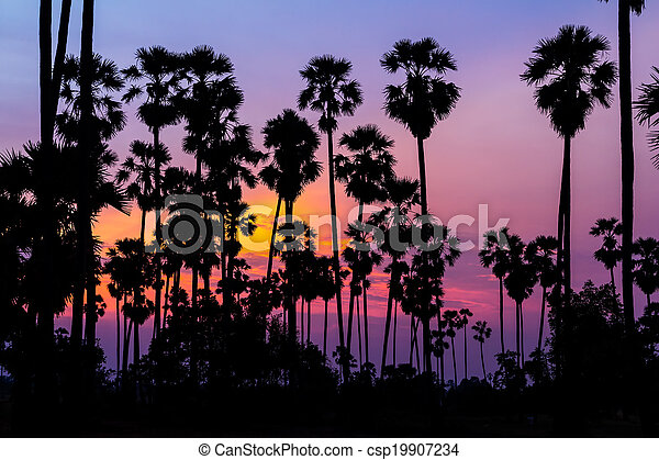 palm trees silhouette on beautiful sunset - csp19907234