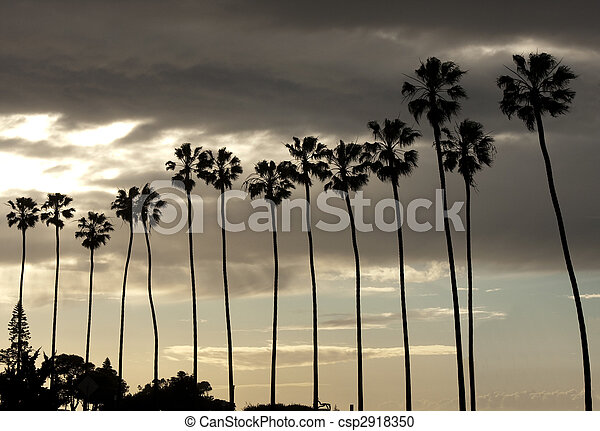 Palm Trees Silhouette on Sunset Sky - csp2918350