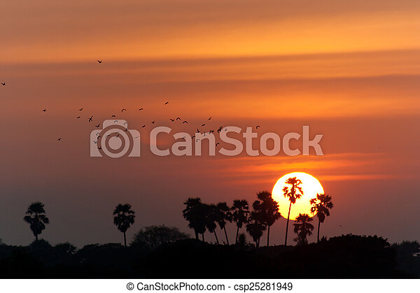 palm trees silhouette on sunset - csp25281949
