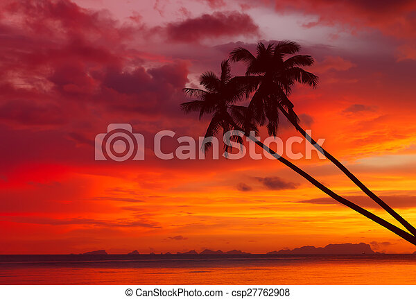 Palm trees silhouette on sunset - csp27762908