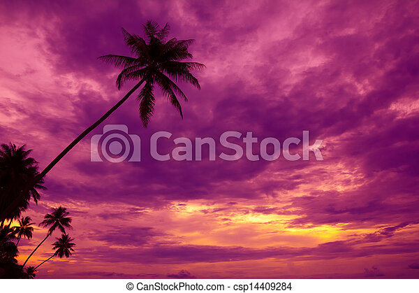 Palm trees silhouette on sunset tropical beach - csp14409284