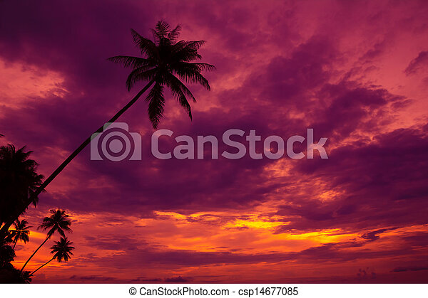 Palm trees silhouette on sunset tropical beach - csp14677085