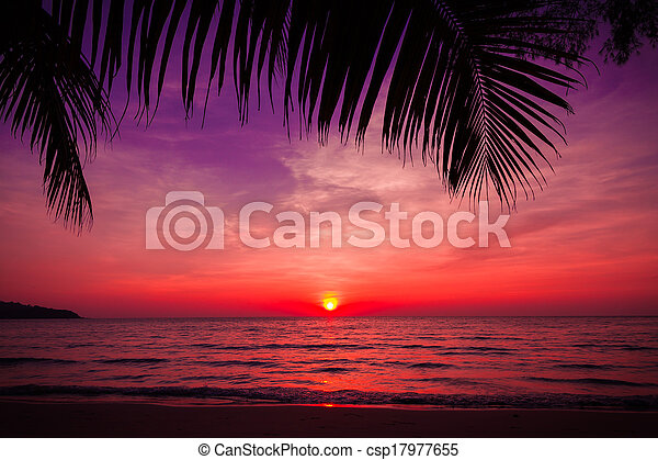 palm trees silhouette on sunset tropical beach. Tropical sunset  - csp17977655
