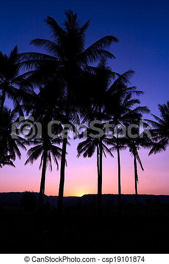 palm trees silhouette - csp19101874