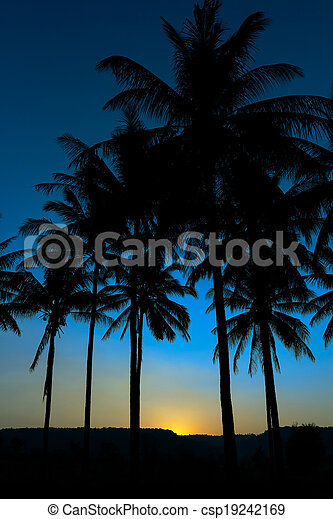 palm trees silhouette - csp19242169