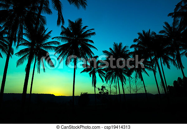 palm trees silhouette with sunset - csp19414313