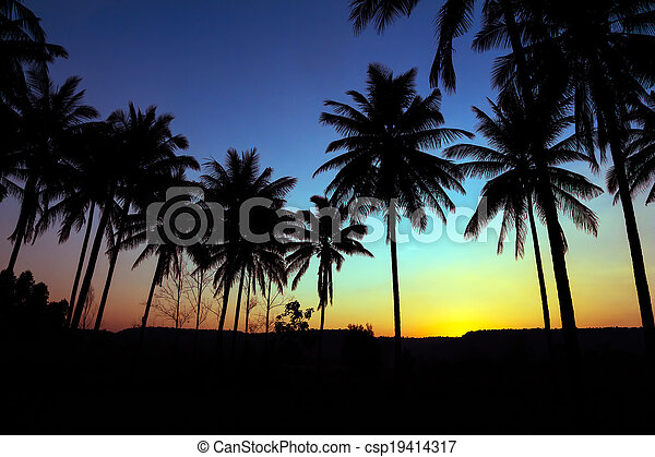 palm trees silhouette with sunset - csp19414317