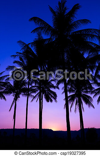 palm trees silhouette with sunset - csp19327395