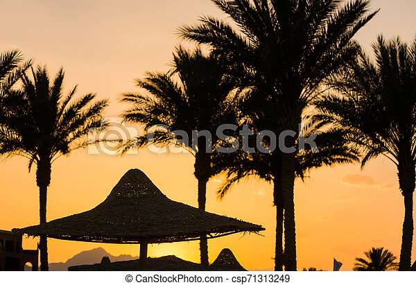 palm trees silhouettes - csp71313249