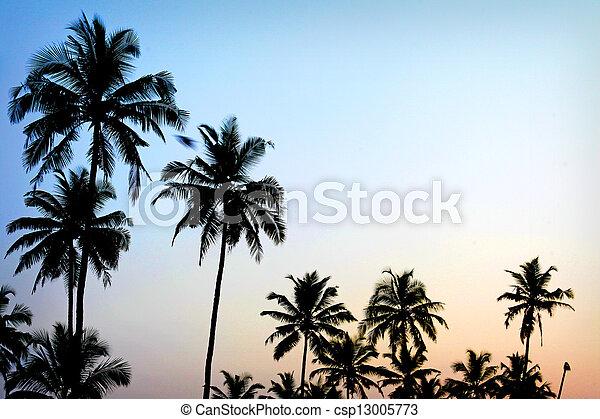 palm trees sunset golden blue sky backlight in mediterranean - csp13005773