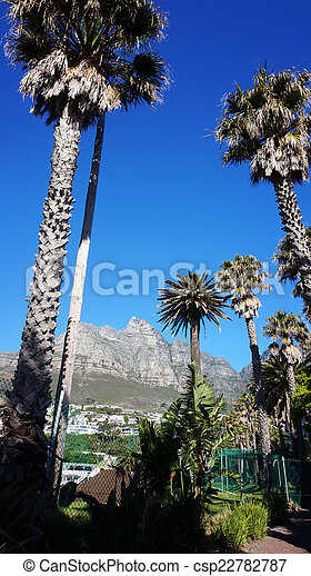 Palm trees with Table mountain in the background - csp22782787