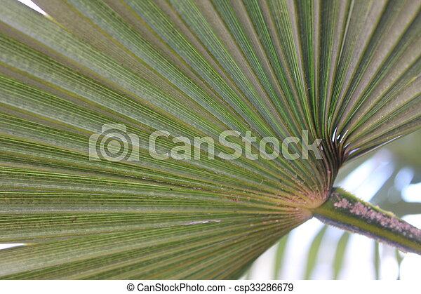 palm vel, close-up, groene - csp33286679