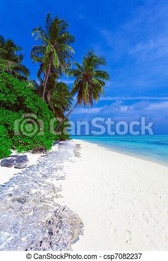 Línea costera de la isla con palmeras - csp7082237