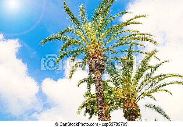 palma - csp53783703