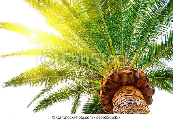 palma - csp52305357