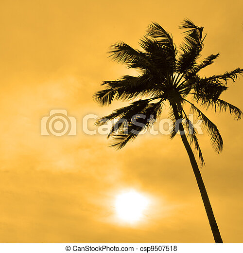 palma, contro, sole - csp9507518