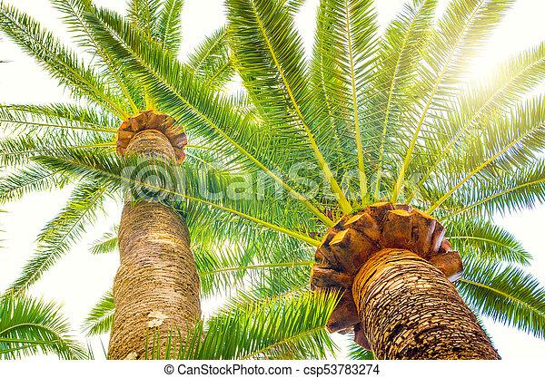 palma - csp53783274