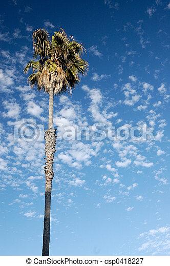 Palma y nubes - csp0418227