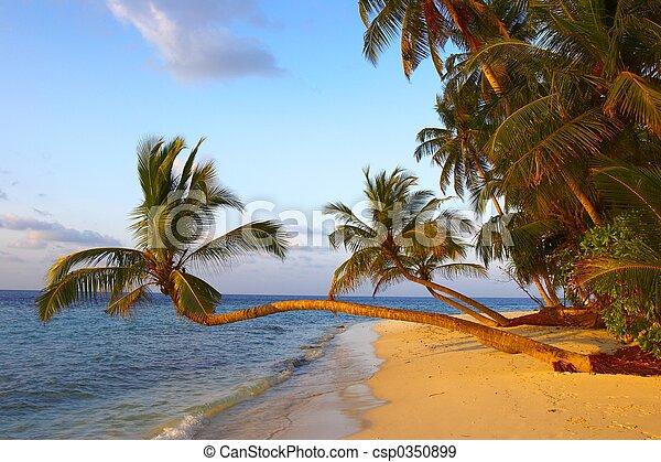 palma, pôr do sol, fantástico, praia, árvores - csp0350899
