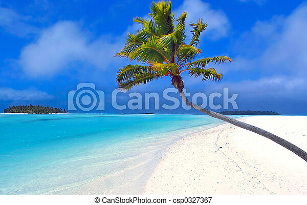 La palma del paraíso - csp0327367