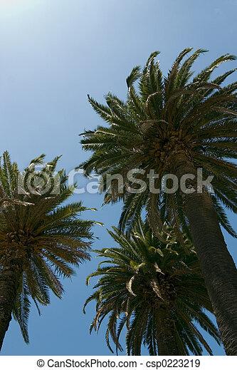 palma, paraisos  - csp0223219