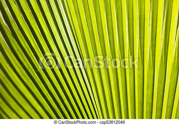 Palma de abanico, maui, hawaii - csp53812049
