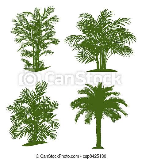 palma - csp8425130
