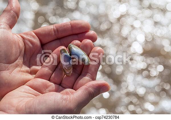 palmas, azul, mujer, ella, concha marina, tenencia - csp74230784