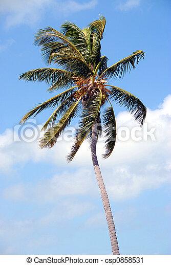 Cambiando palmera - csp0858531