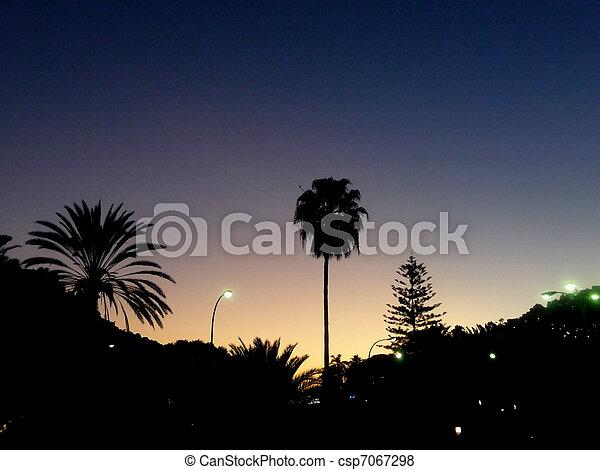 Una palmera silueta - csp7067298