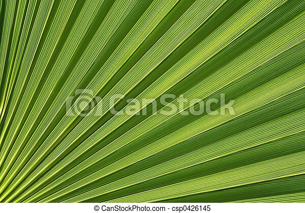 Palmetto abstracto - csp0426145