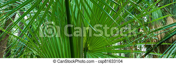 Palmettos,, South Carolina - csp81633104