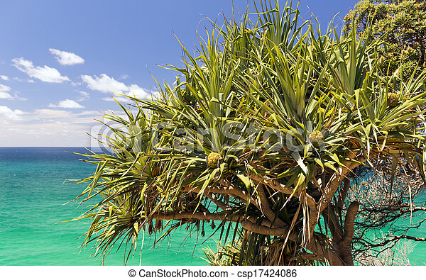palmier pandanus australie il t nord peupler arbres images rechercher photographies. Black Bedroom Furniture Sets. Home Design Ideas