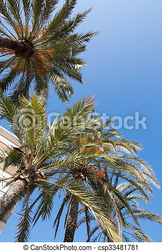 palmier soleil