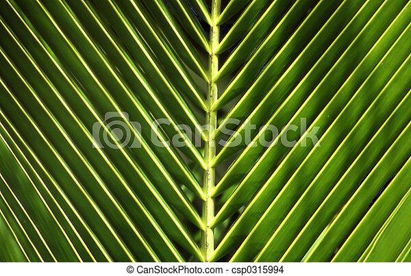 palmo-foglia - csp0315994