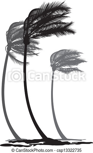 Palms in the wind - csp13322735