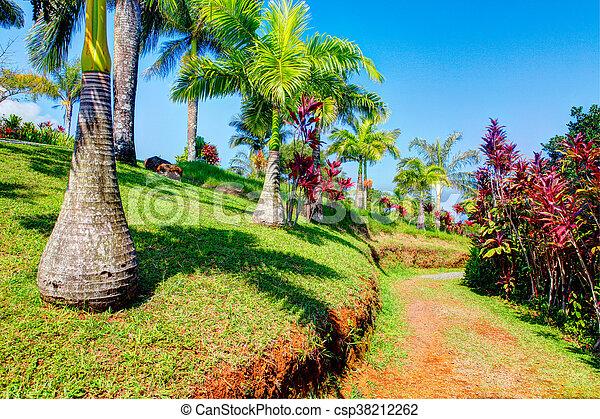 Palms in tropical garden . garden of eden, maui hawaii. Palms in ...