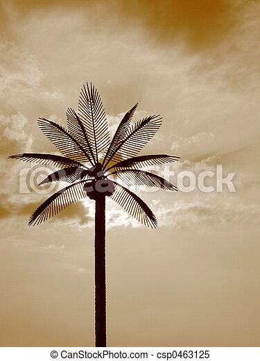 Palms n' Sun - csp0463125