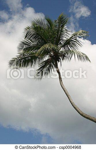 palmtree - csp0004968