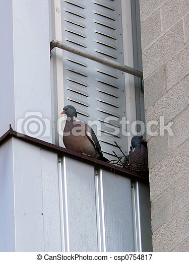 Palomas en el balcón - csp0754817