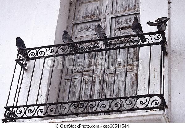 Cinco palomas en el balcón - csp60541544